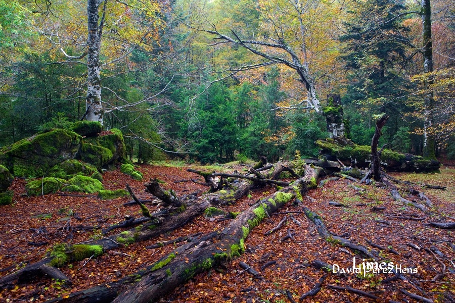 P.N.Ordesa - Bosques encantados - Limes , David Pérez Hens