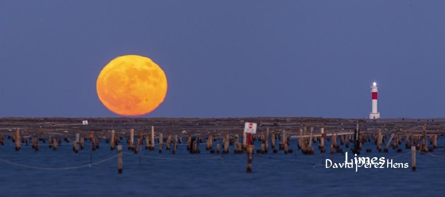 Luna grande, Delta del Ebro - Paisajes deltaicos y humedales.  - Limes , David Pérez Hens