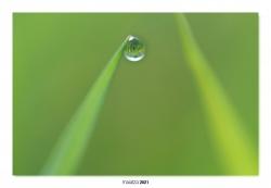 07-El agua de la vida.