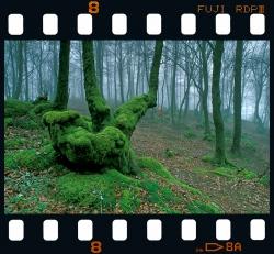 Elosu beech forest - Bergara