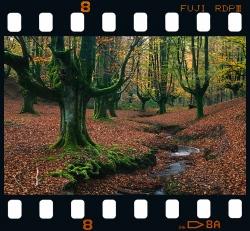 Otzarreta beech forest - Bizkaia.