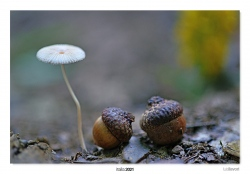 12-Between acorns.