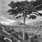 El Pi de la Coveta. Castell de Cabres