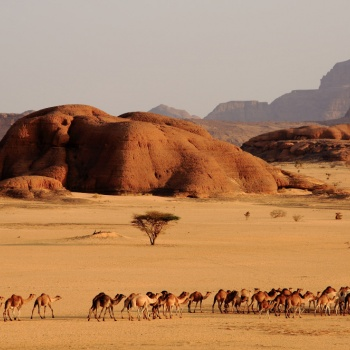 Ennedi, behind the tracks of the enigma