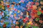 Tapiz de otoño