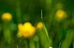 Intimate nature