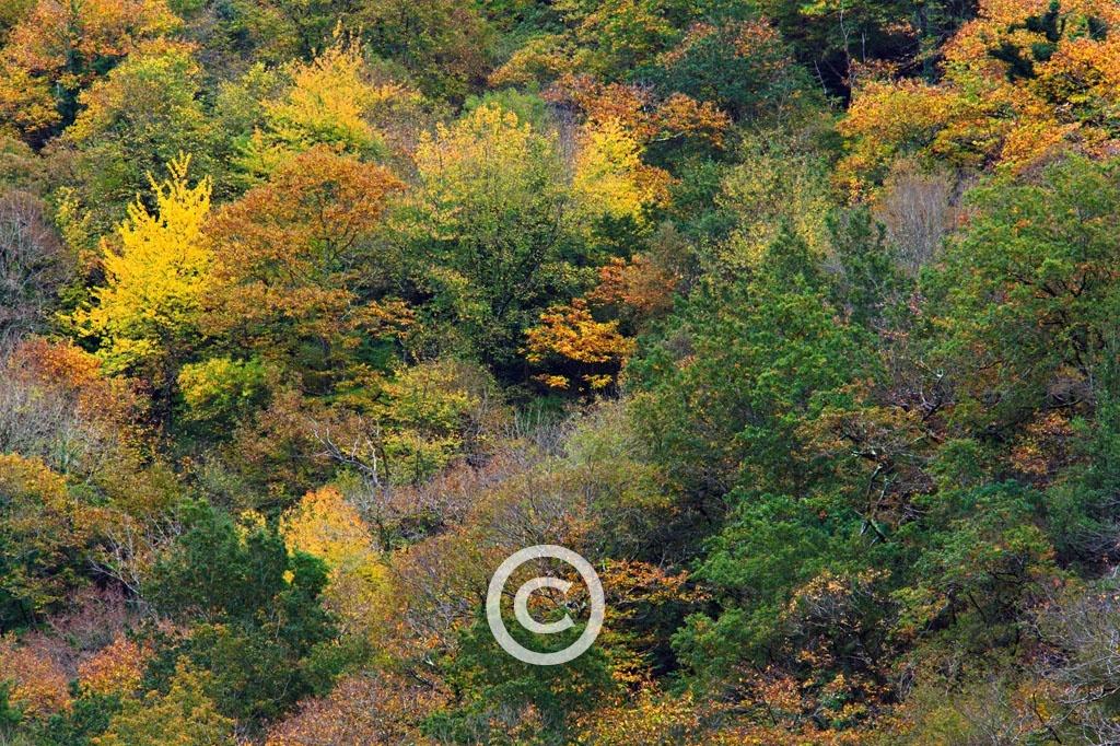 El Bosque Atlántico - MANUEL LEMOS  FOTOGRAFÍA., Fotografía. Deseño. Audiovisual.