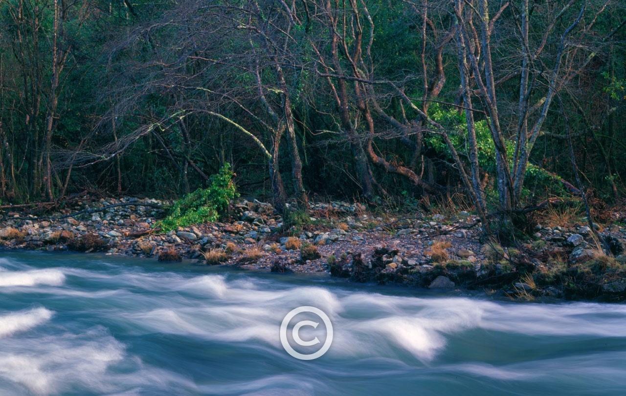 El Bosque Atlántico - MANUEL LEMOS, Fotografía. Diseño. Audiovisual.