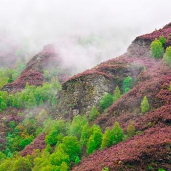 Paisaxe e Natureza