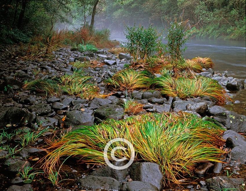 El Bosque Atlántico - MANUEL LEMOS PHOTOGRAPHY, Photography. Design. Audiovisual.