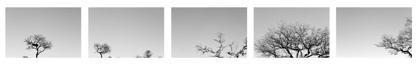 DE LETABA A SATARA II / FROM LETABA TO SATARA II . Sudáfrica - PIEZAS INDIVIDUALES - MARÍA CLAUSS, Fotógrafa