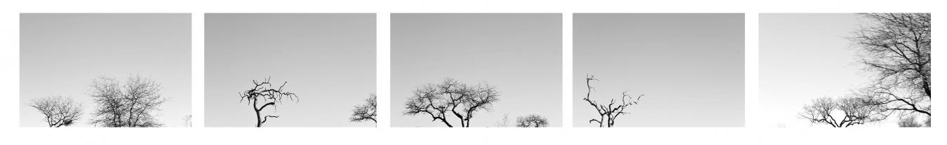 DE LETABA A SATARA IV /  FROM LETABA TO SATARA IV. Sudáfrica - PIEZAS INDIVIDUALES - MARÍA CLAUSS, Fotógrafa