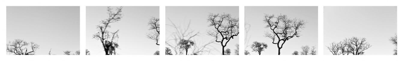 DE LETABA A SATARA V / FROM LETABA TO SATARA V . Sudáfrica - PIEZAS INDIVIDUALES - MARÍA CLAUSS, Fotógrafa