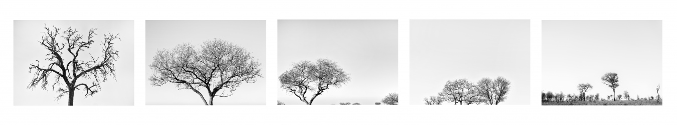 DE LETABA A SATARA I / FROM LETABA TO SATARA I. Sudáfrica - PIEZAS INDIVIDUALES - MARÍA CLAUSS, Fotógrafa