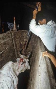 Matanza de Cebú