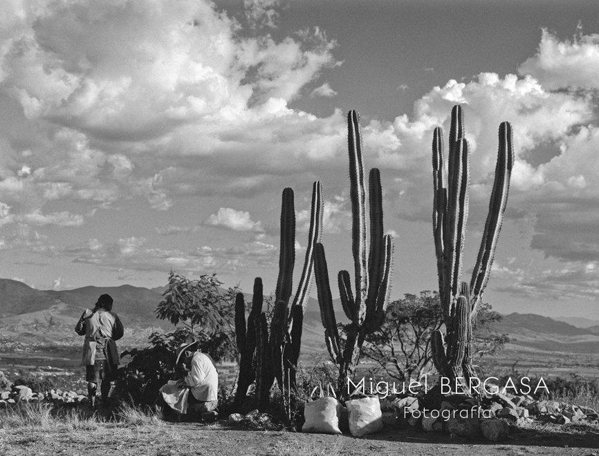 Monte Alban - Mexico  - Miguel BERGASA, Fotografía
