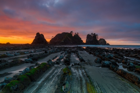 OLYMPIC NATIONAL PARK - Febrero 2015