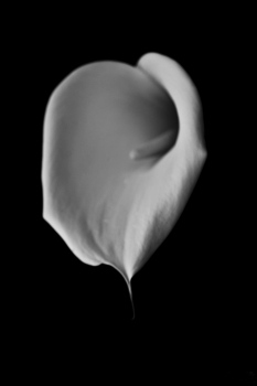 Flower | 2009 | A Coruña, Spain