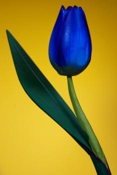 Tulip | 2010 | A Coruña, Spain