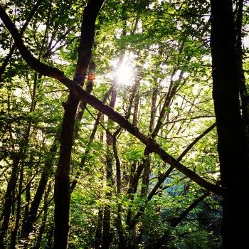 Light between branches | 2015 | Fragas do Eume - A Coruña, Spain