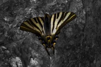 Butterfly | 2010 | A Coruña, Spain