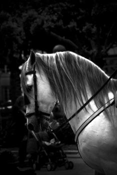 Horse | 2009 | A Coruña, Spain
