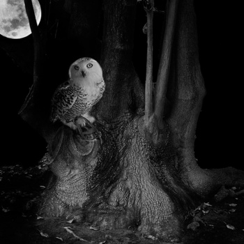 Vagabundeo nocturno