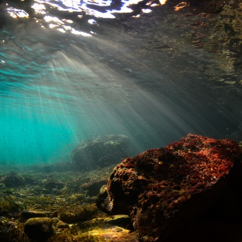 Paisaje Submarino