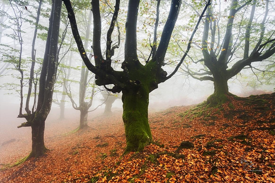 The Fairies´s World - Mundo de Hadas - David Frutos Egea | Fotos del hayedo más bello de España.