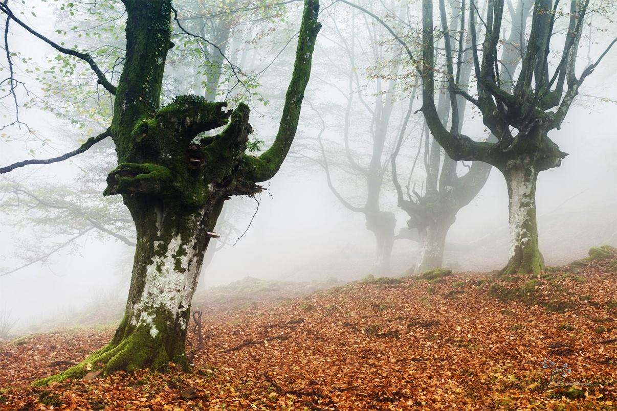 The Fairies´s World IV - Mundo de Hadas - David Frutos Egea | Fotos del hayedo más bello de España.