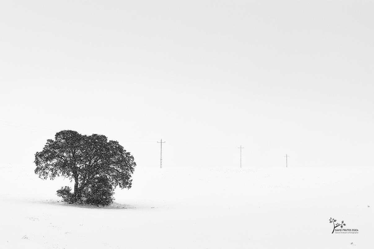 White World - B&N - David Frutos Egea | Fotografías en Blanco y Negro