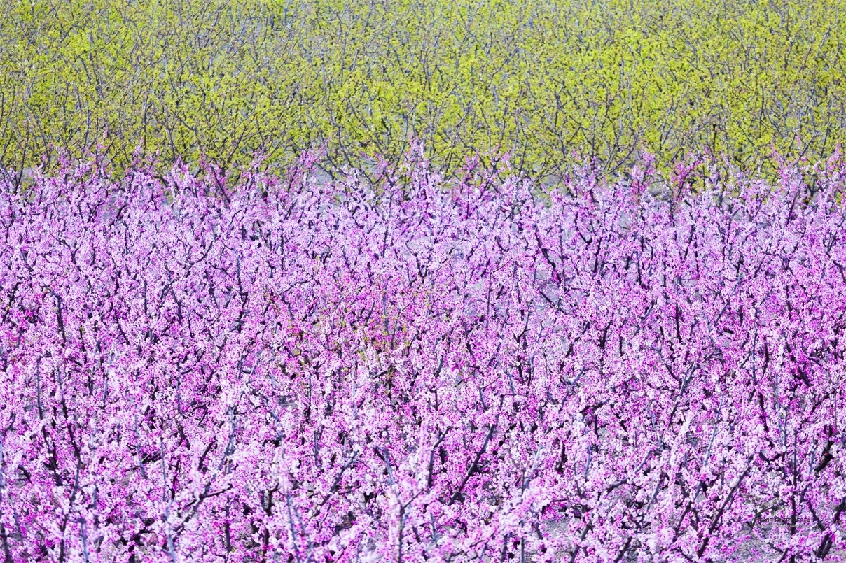 Spring - Color - David Frutos Egea | Fotógrafías en color