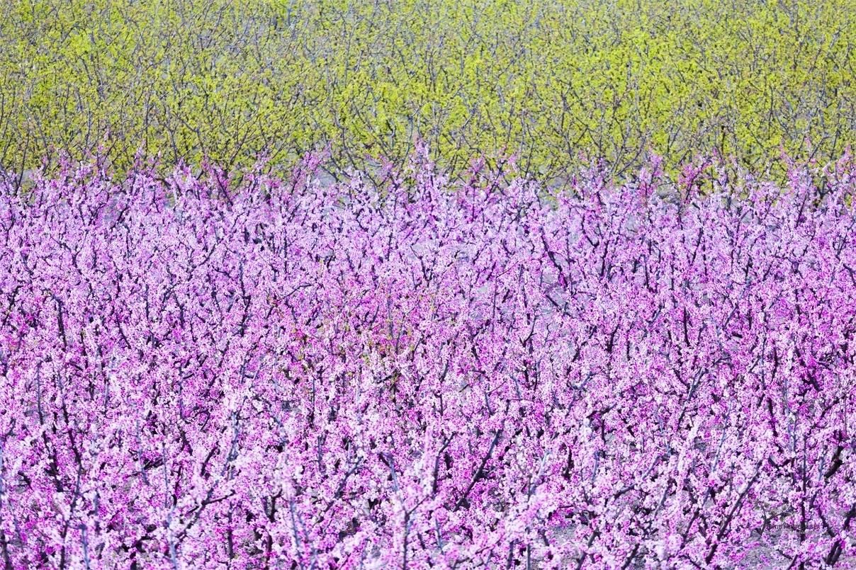 Spring - Color - David Frutos Egea   Fotógrafías en color