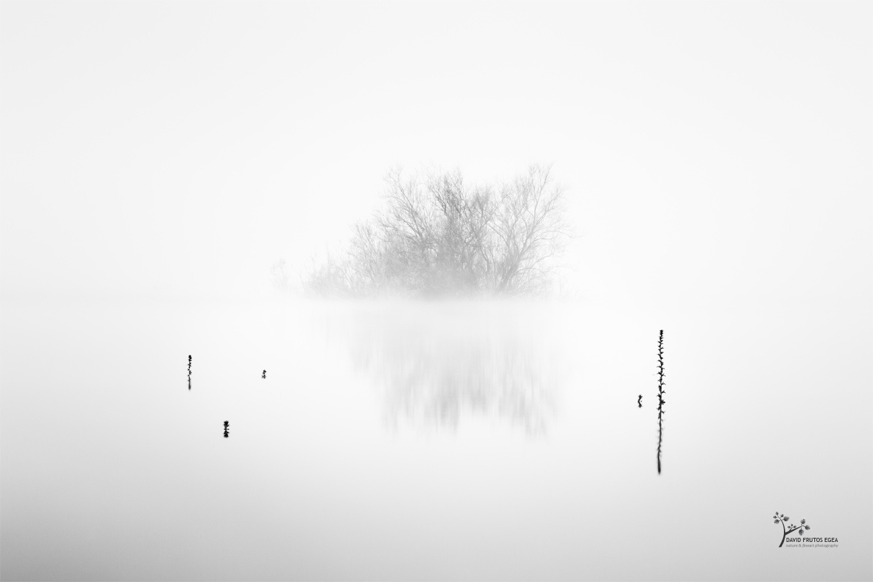 Path of thorns - Novedades - David Frutos Egea | Últimas fotografías publicadas