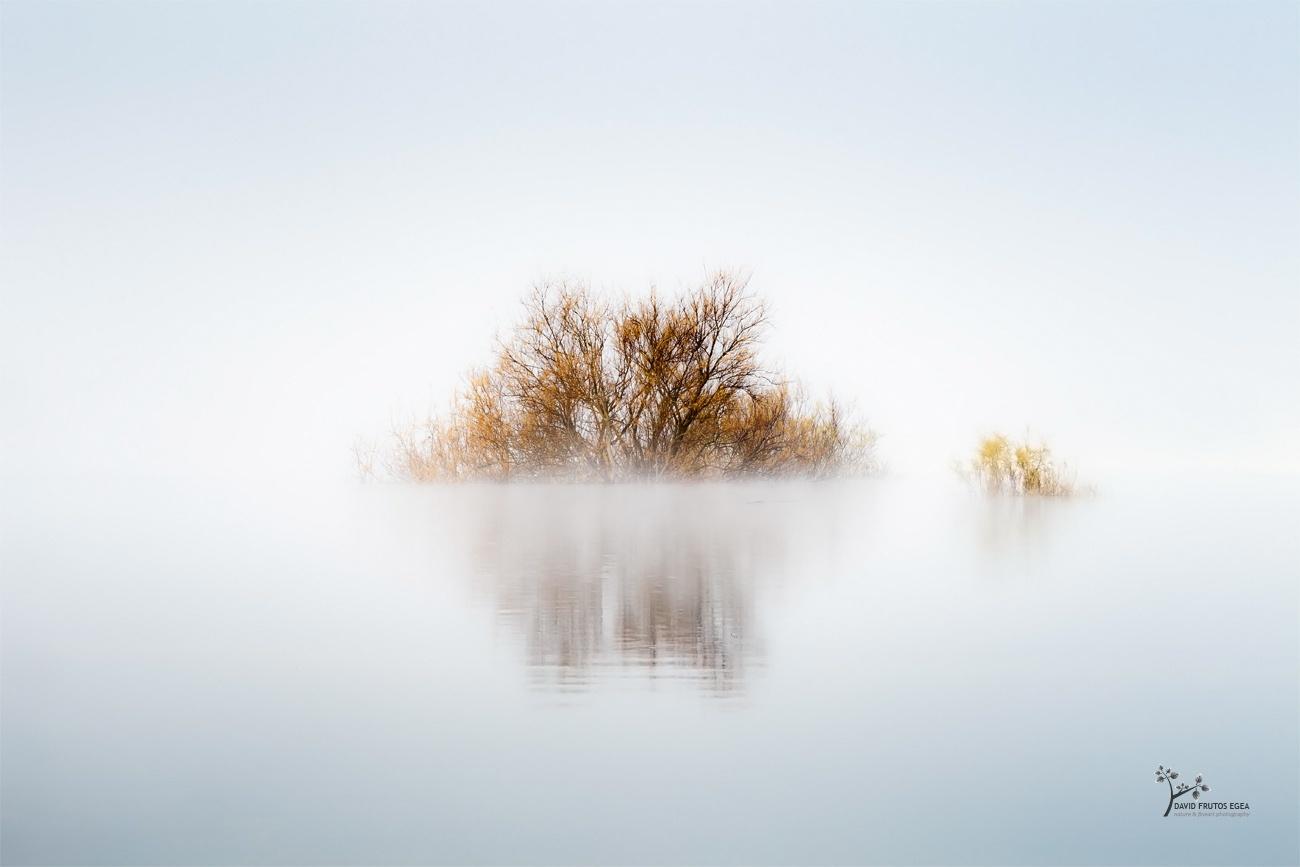 The Swamp Star - Seres del Pantano - David Frutos Egea | El agua y la niebla son protagonistas.