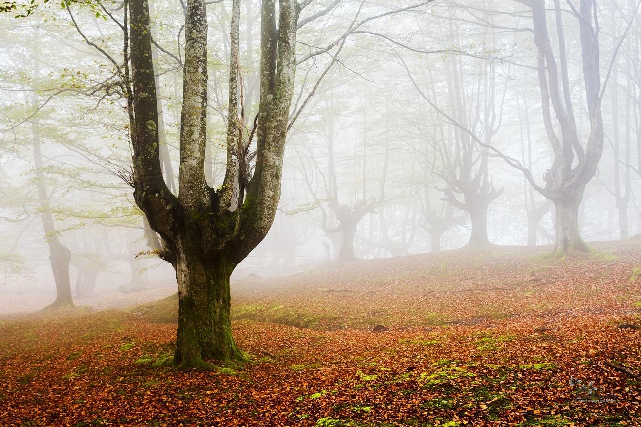 Lady Forest - Mundo de Hadas - David Frutos Egea | Fotos del hayedo más bello de España.