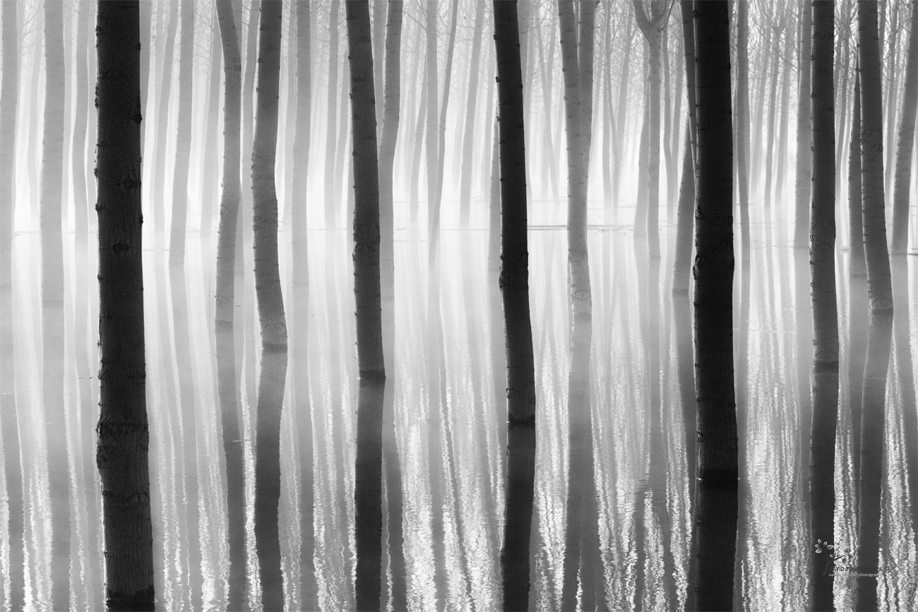 Trapped - Seres del Pantano - David Frutos Egea | El agua y la niebla son protagonistas.