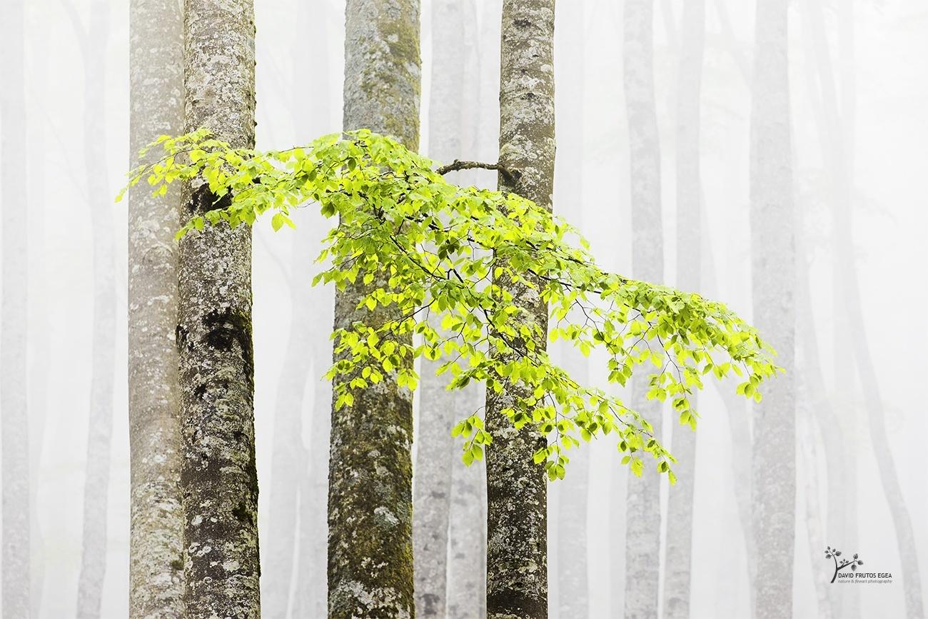 Reborn Forest II - Color - David Frutos Egea | Fotógrafías en color