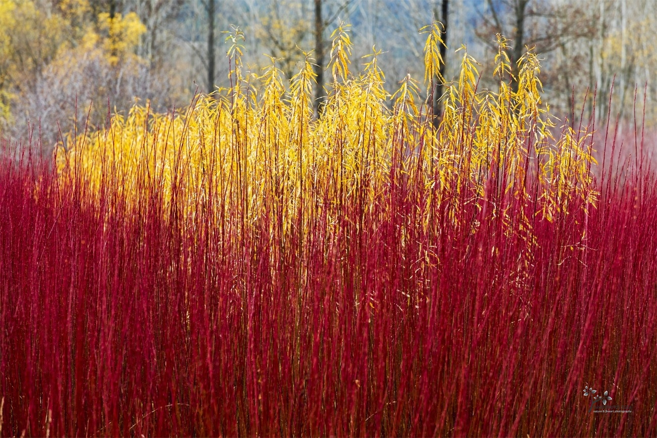 Dressed in Red & Yellow - Color - David Frutos Egea - Color photographs
