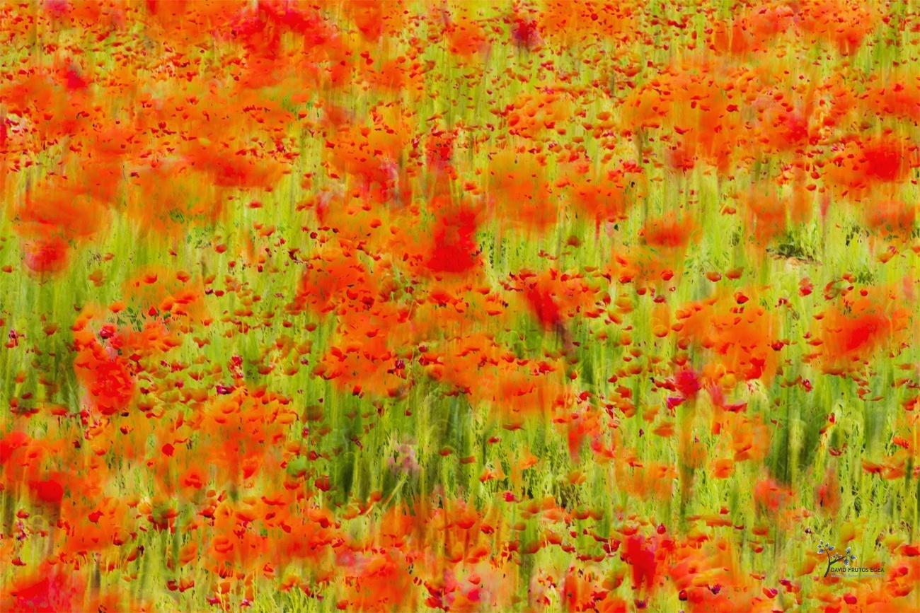 PoppyArt - Pinceladas - David Frutos Egea | Visiones creativas en plena naturaleza.