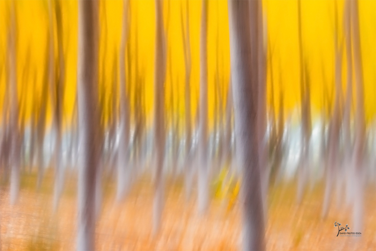 Painting the Fall - Color - David Frutos Egea - Color photographs