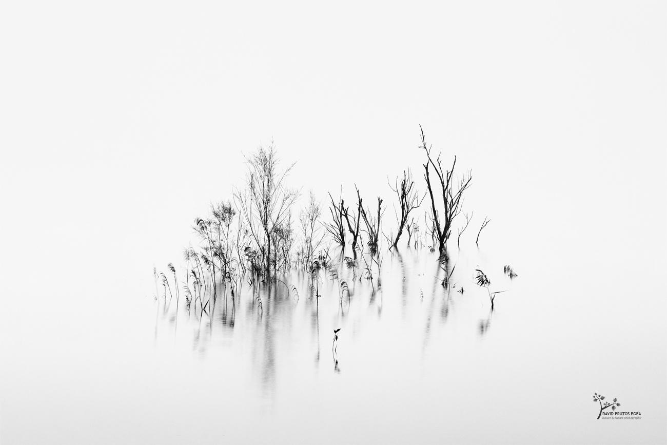 Life and Death - B&N - David Frutos Egea   Fotografías en Blanco y Negro