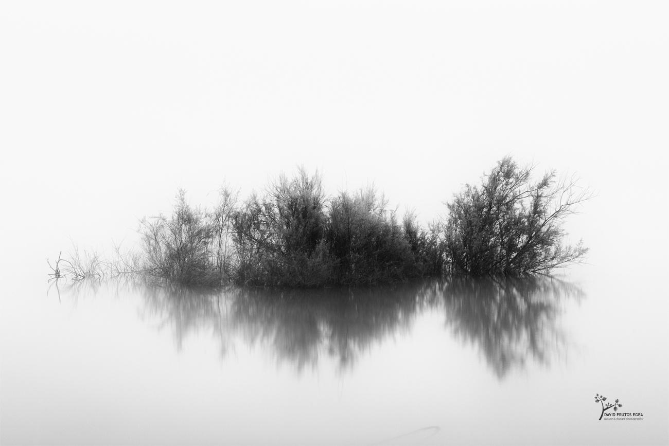 Silence, The Monster is Sleeping - B&N - David Frutos Egea | Fotografías en Blanco y Negro