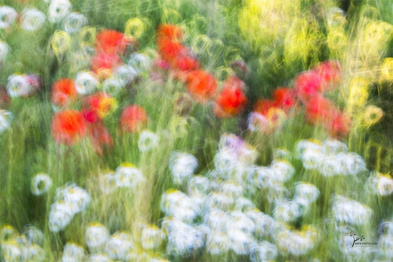 Impressionist Spring - Color - David Frutos Egea - Color photographs