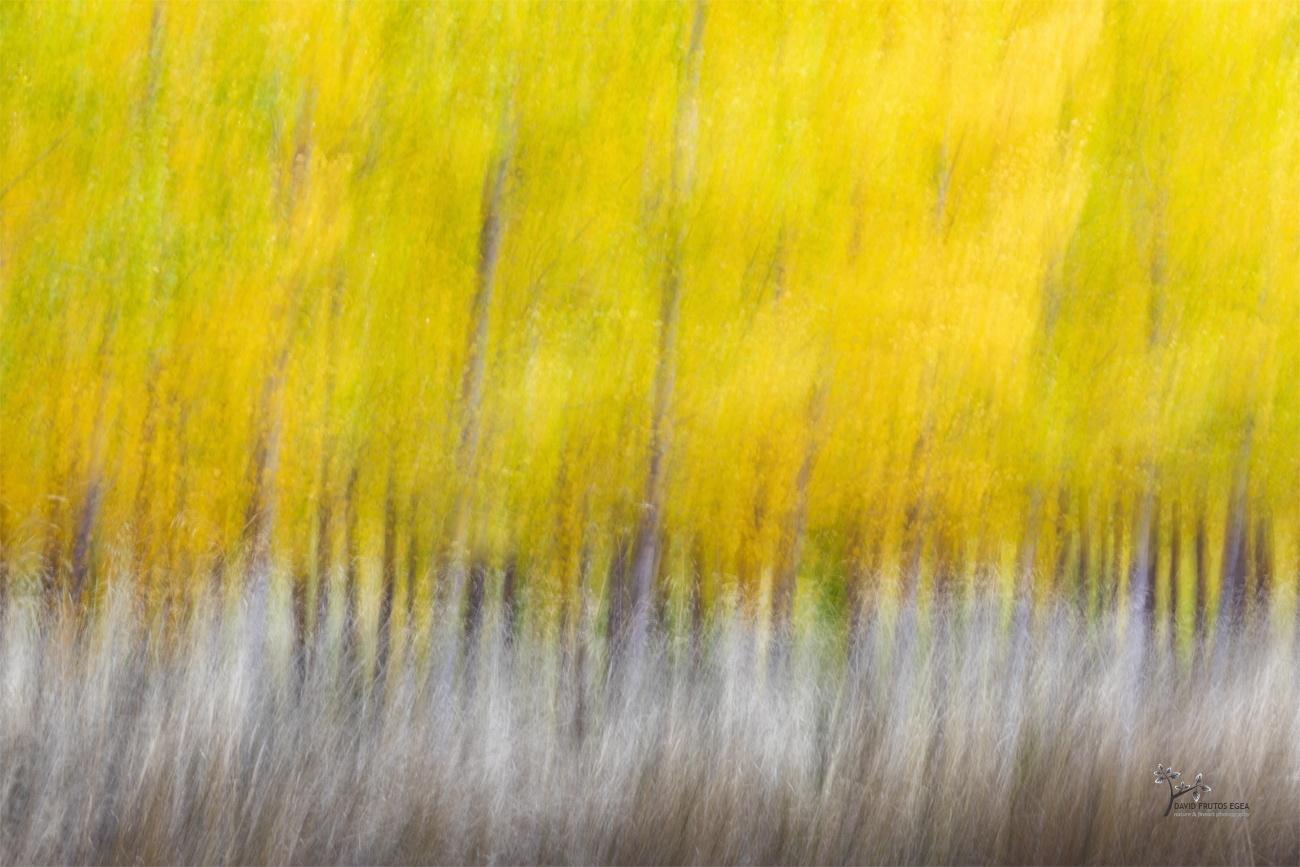 Autumnal Games - Pinceladas - David Frutos Egea | Visiones creativas en plena naturaleza.