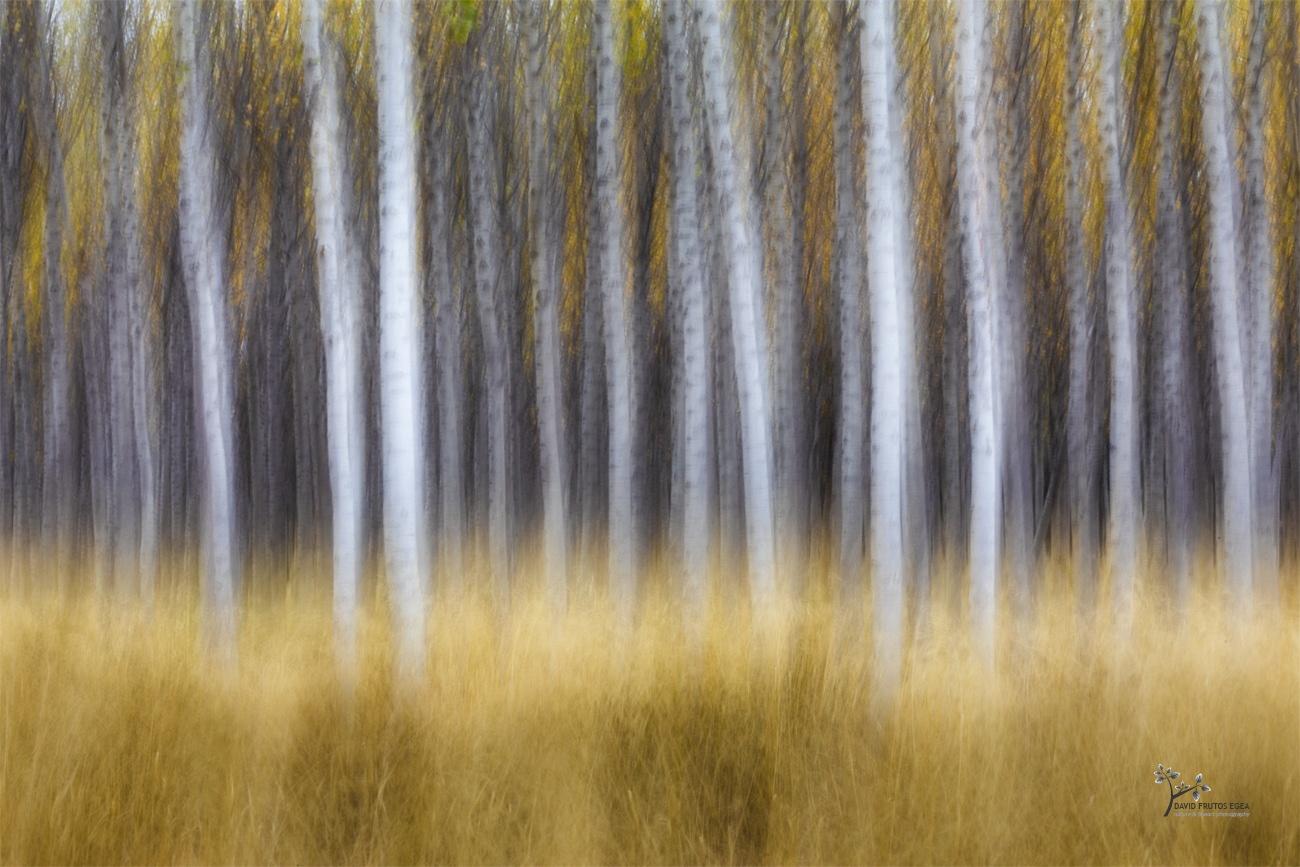 Autumnal Games II - Color - David Frutos Egea - Color photographs