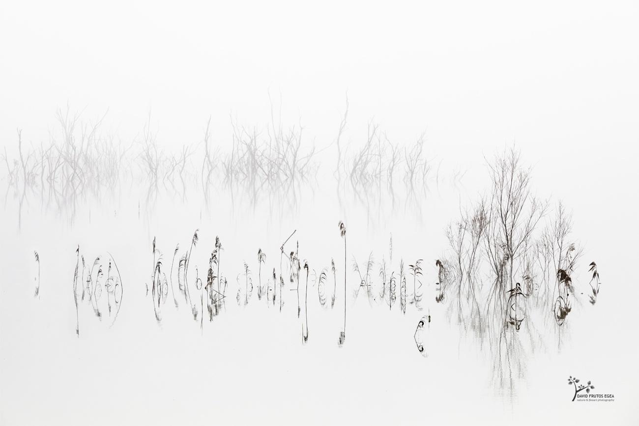 Vegetal Symphony - B&N - David Frutos Egea | Fotografías en Blanco y Negro