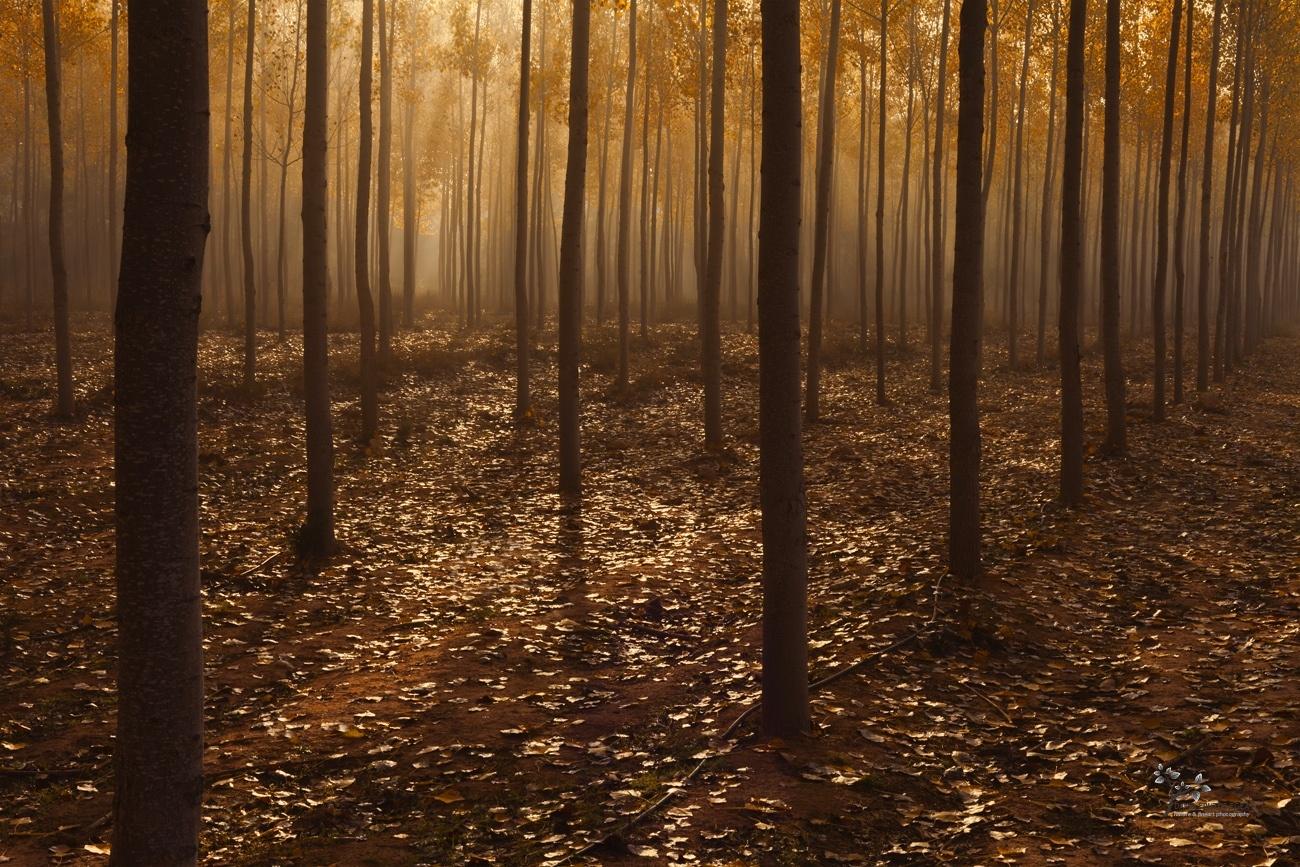 Fog in the Forest - Color - David Frutos Egea - Color photographs
