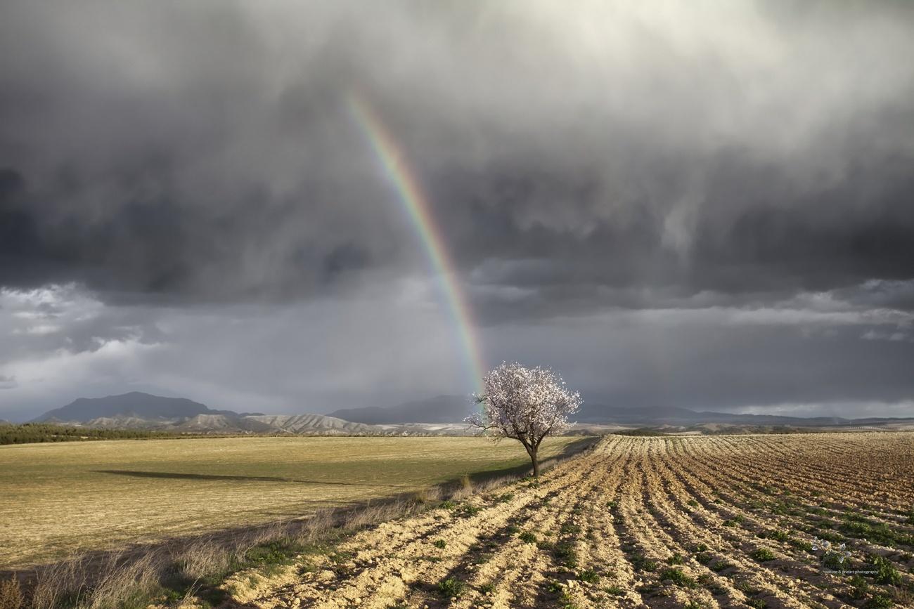 One Almond Tree, One Storm and Two Rainbows - Color - David Frutos Egea   Fotógrafías en color