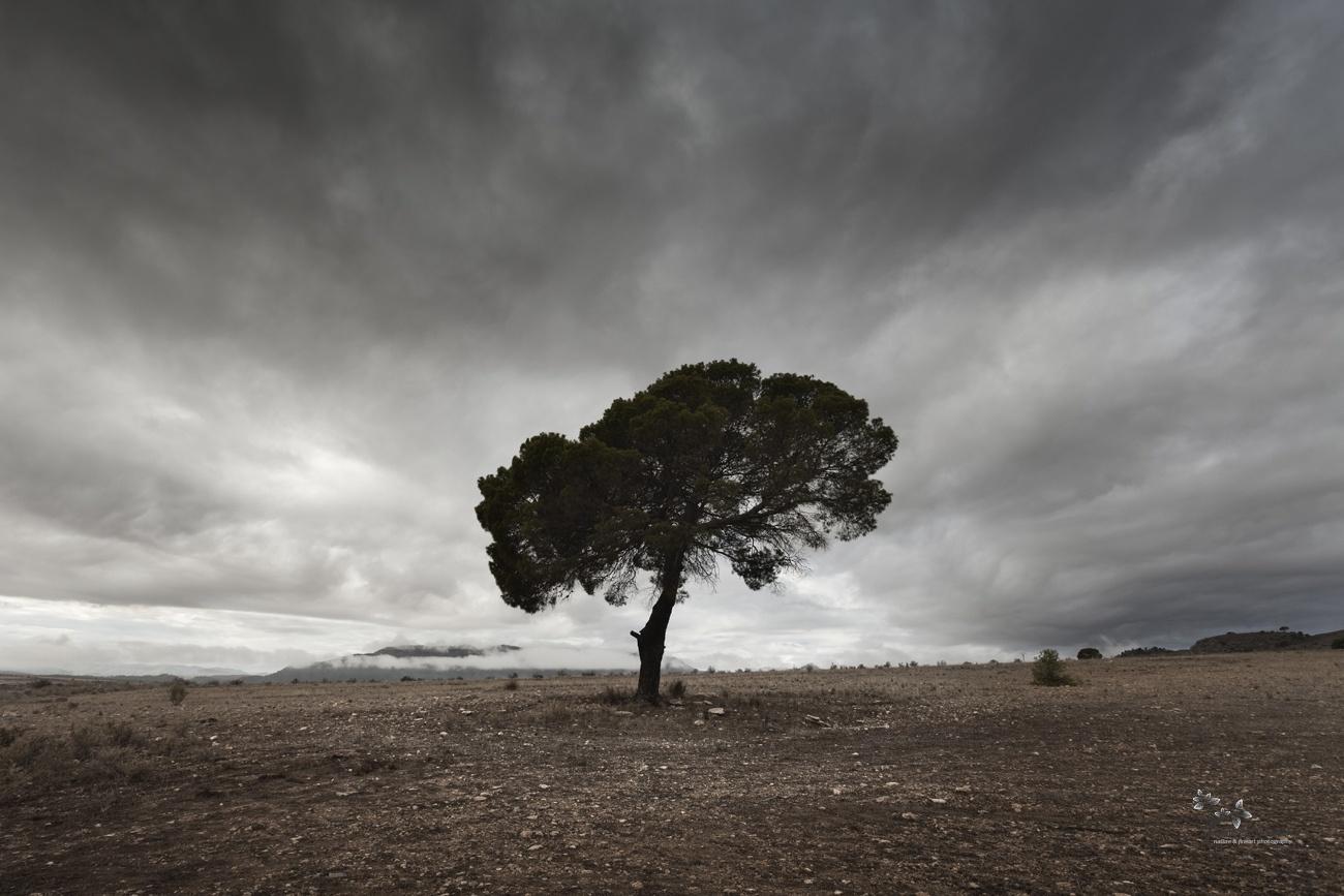 The Last Tree - Color - David Frutos Egea - Color photographs